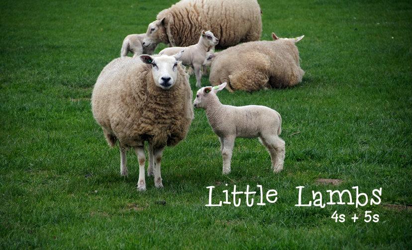 littlelamb2